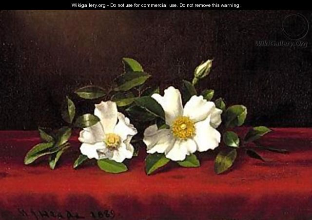 Two Cherokee Roses on Red Velvet by Martin Johnson Heade